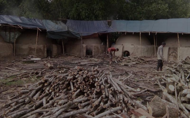 সখীপুরে বনাঞ্চল ঘেঁষে অবৈধ কয়লা কারখানায় বিপন্ন পরিবেশ