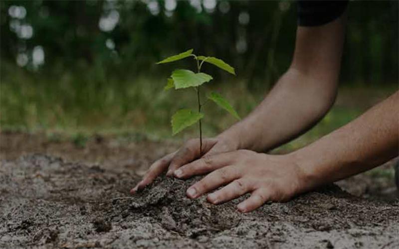পরিবেশ রক্ষায় বৃক্ষরোপণ অপরিহার্য