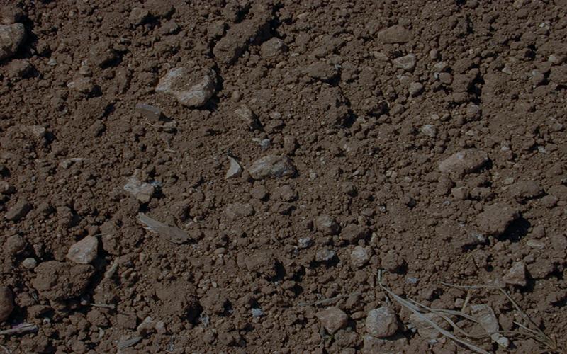 মাটিতে বোরনের ঘাটতি: হুমকিতে ফসল ও পরিবেশ