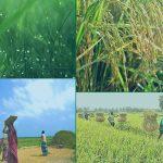 শীতের আগমনী বার্তা নিয়ে হেমন্ত এসেছে আজ প্রকৃতিতে