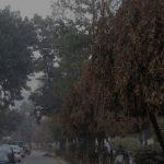 যানবাহনের দূষণে ঢাকা শহরের গাছপালার সংবেদনশীলতা কতটা বিনষ্ট হচ্ছে
