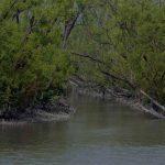 ঘূর্ণিঝড় বুলবুলের আঘাতে সুন্দরবনে কমপক্ষে ক্ষতিগ্রস্ত হয়েছে ১০ শতাংশ গাছপালা