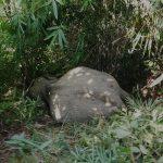 বান্দরবানে ১৫ দিনের ব্যবধানে আরও এক হাতির মৃতদেহ উদ্ধার