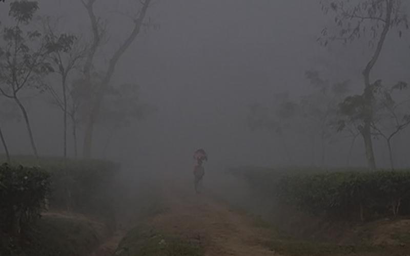 শ্রীমঙ্গলে তাপমাত্রা কমে ১১.৩ ডিগ্রি সেলসিয়াসে, ৩ দিন ধরে চলছে একই অবস্থা