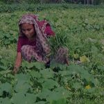 জলবায়ু পরিবর্তনের সঙ্গে লড়াই করে ফসল উৎপাদন করছে সিলেটের নারীরা
