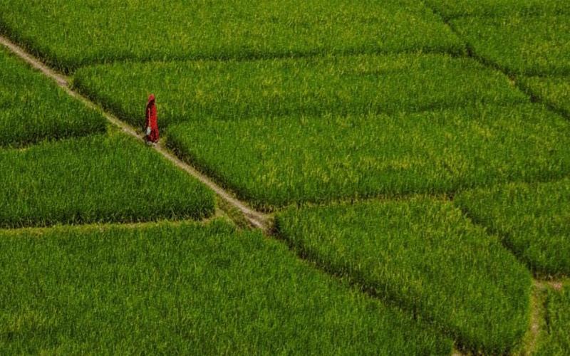 জলবায়ু পরিবর্তনে হুমকির মুখে বাংলাদেশের কৃষি খাত, ২৪ শতাংশ আবাদি জমি কমার আশঙ্কা