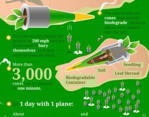 বিমান হতে বীজ বোমার মাধ্যমে বছরে রোপণ করা যায় ১ বিলিয়ন গাছ