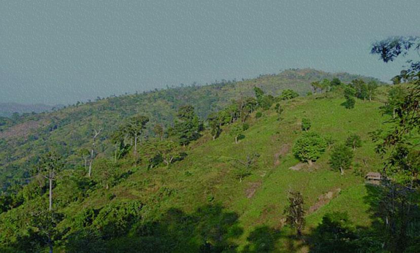 তাজিংডং পাহাড়ে ইটভাটা স্থাপন, সাবেক উপজেলা চেয়ারম্যানের ১০ বছরের জেল