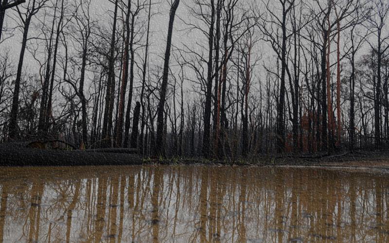দাবানলের পর আকস্মিক বন্যা দেখা দিয়েছে অস্ট্রেলিয়ার বিভিন্ন রাজ্যে