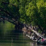 প্লাস্টিকের বোতল, খাবারের প্যাকেট ফেলায় হুমকিতে সুন্দরবন