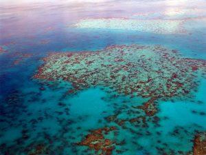 Great Barrier Reef | দ্য গ্রেট ব্যারিয়ার রিফটি