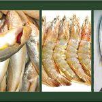 বিলুপ্তির পথে বঙ্গোপসাগরের সাত প্রজাতির মাছ