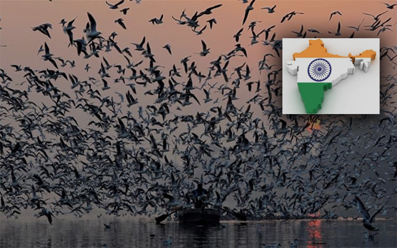 ভারতে ব্যাপকভাবে বিপন্ন হচ্ছে পাখির বংশ