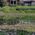অবৈধ দখল-দূষণে ছোট হয়ে আসছে ডাকাতিয়া নদী