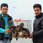 সিরাজগঞ্জে বিপন্ন প্রজাতির ২টি ভুবন চিল উদ্ধার