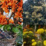 প্রাকৃতিক সৌন্দর্য নিয়ে ঋতুরাজ বসন্তে জীববৈচিত্র্য