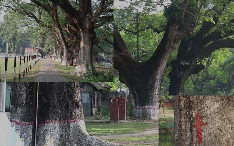 রূপপুর পারমাণবিক বিদ্যুৎ প্রকল্পের নিরাপত্তা বেস্টনী তৈরী কাটা পড়ছে ১ হাজারের বেশি শতবর্ষী গাছ