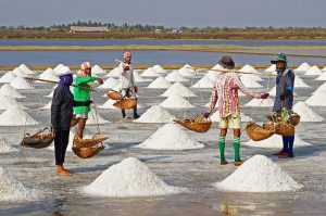 Salt Cultivation