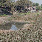 https://www.greenpage.com.bd/environmental-pollution/
