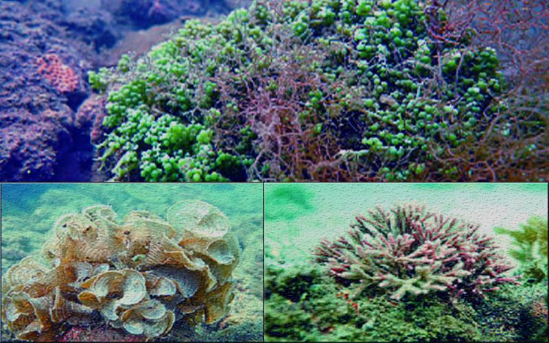 https://www.greenpage.com.bd/lifestyle/biodiversity/