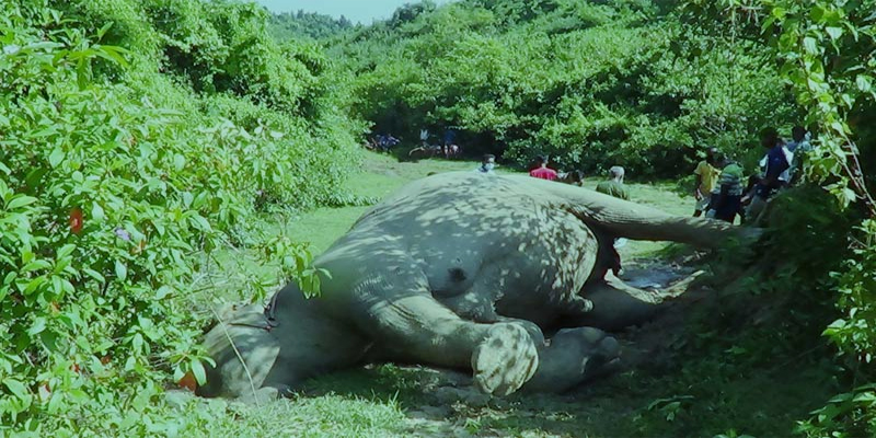 শেরপুরের রাঙাজান গ্রামে খাদে পড়ে বন্য হাতির মৃত্যু