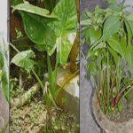 বিশ্ব উদ্ভিদ সংগ্রহশালায় নতুন ৪ প্রজাতির উদ্ভিদ যোগ করেছে বাংলাদেশ
