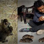 সিরাজগঞ্জের কামারখন্দে ৪ মেছো বাঘের বাচ্চা উদ্ধার