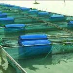 পরিবেশ সম্মত পদ্ধতিতে মাছ চাষ - এসিপি