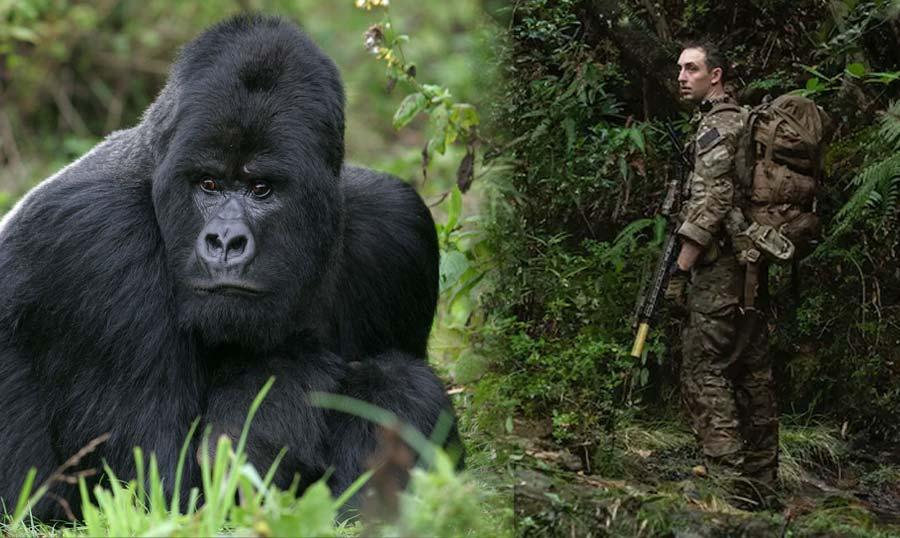 গরিলাদের (Gorilla) বিলুপ্তি