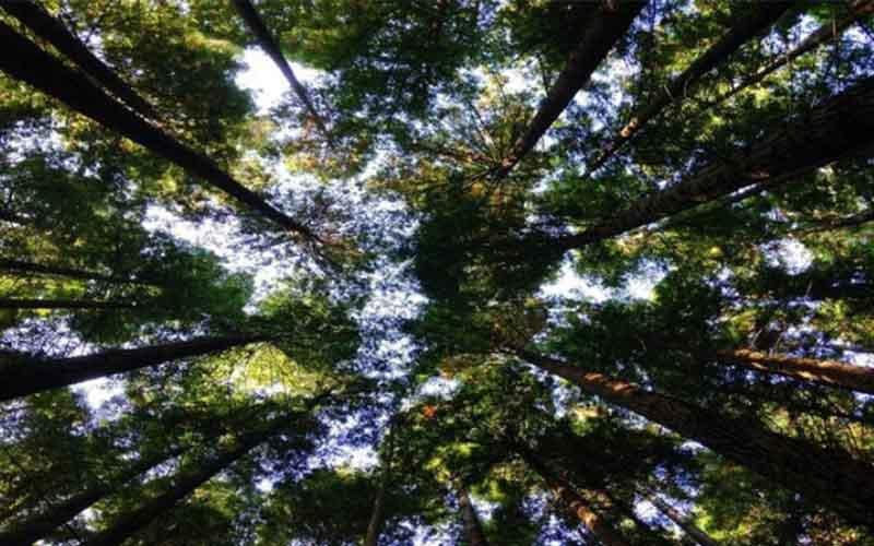 বিশ্ব প্রকৃতি সুরক্ষায় তহবিল তিনগুণ করার দাবি