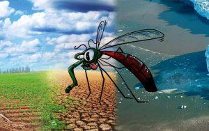 বিশ্ব তাপমাত্রা বৃদ্ধির কারণে শতশত কোটি বিশ্ববাসী ম্যালেরিয়া এবং ডেঙ্গুর ঝুঁকিতে পড়বে
