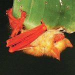 নতুন প্রজাতির প্রজাপতি বাদুড়ের সন্ধান পেলেন জাবি অধ্যাপক